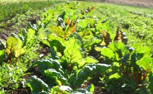 start organic farming