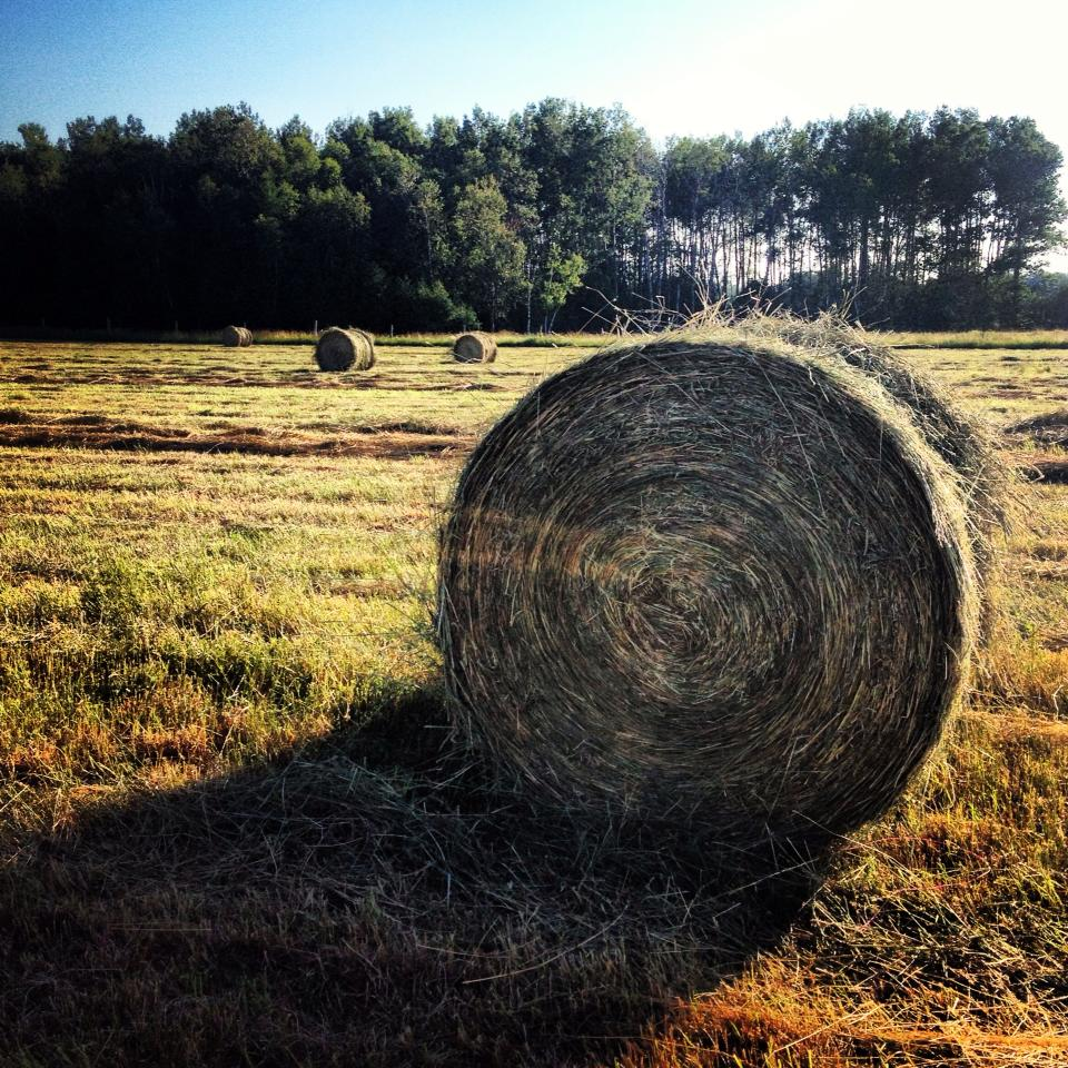 How to Cut, Bale, and Store Hay